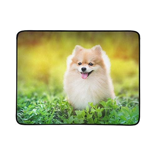 WYYWCY Netter flaumiger Pomeranian Hund, der Frühling sitzt Stockfoto Muster-tragbare und Faltbare Deckenmatte 60x78 Zoll-handliche Matte für kampierenden Picknick-Strand Reise im Freien im Freien -