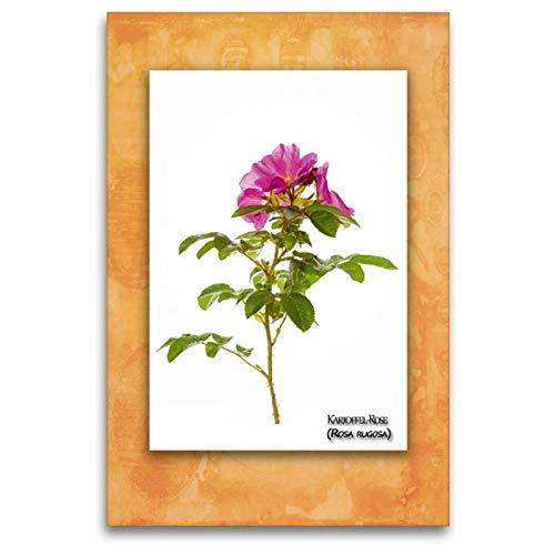 Calvendo Premium Textil-Leinwand 80 cm x 120 cm hoch, Kartoffel-Rose (Rosa Rugosa) | Wandbild, Bild auf Keilrahmen, Fertigbild auf echter Leinwand, Leinwanddruck Natur Natur