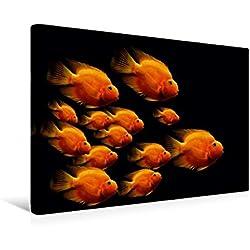 Calvendo Premium Textil-Leinwand 45 cm x 30 cm Quer, der orangefarbene Fischschwarm   Wandbild, Bild auf Keilrahmen, Fertigbild auf Echter Leinwand, Leinwanddruck: Exotische Fische Tiere Tiere
