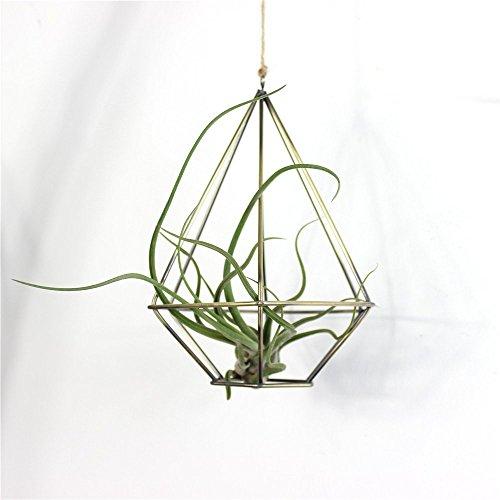 Rustic-Fioriera sospesa forma geometrica in metallo in stile rustico con supporto per piante Tillandsia per porta, in bronzo, a forma di vaso, colore: nero/bronzo, metallo, Diamante,