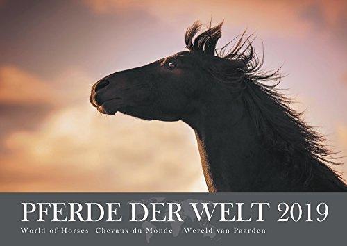 Pferde der Welt 2019: Kalender - Posterkalender, Wandkalender