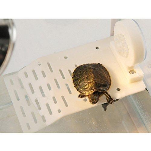 Takestop® isola galleggiante in plastica con ventosa terrazza piattaforma per tartarughe rettili acquario vaschetta colori casuali ed_0229