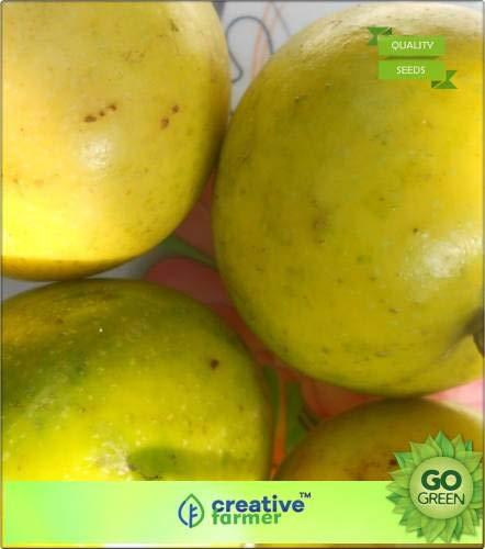 Pinkdose Fruchtsamen Passionsfruchtsamen Schnelle Fruchtpflanzensamen Fruchtsamen Samen