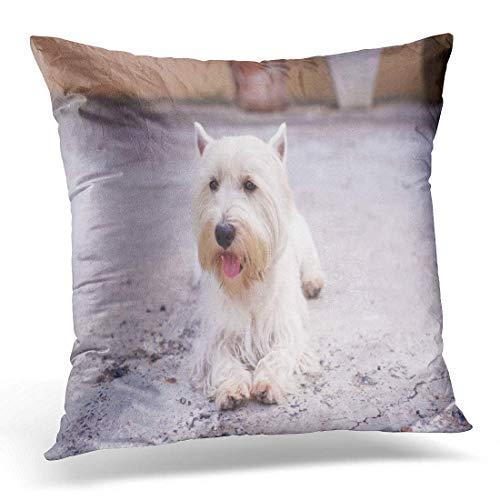 gatetop Kissenbezug, niedlich, süßer weißer Hund von West Highland Terrier Westie, dekorativer Kissenbezug für Zuhause, quadratisch, 45,7 x 45,7 cm