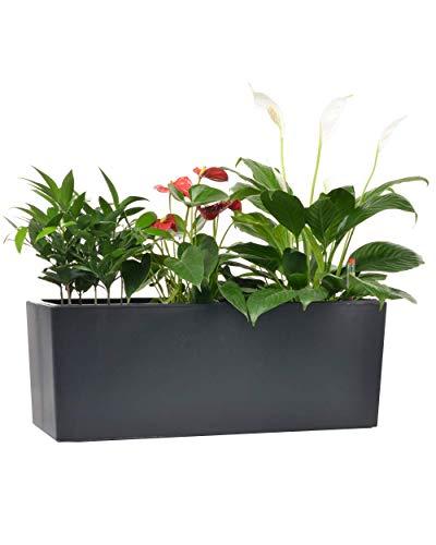 Länglicher, selbstwässernder Pflanzentopf mit Kokosnuss-Kokosserde 14 x 41 cm Indoor Haus Garten Modern Dekorativer Blumentopf für alle Hauspflanzen Blumen Kräuter Black(7.5''x 20'') - Afrikanische Kokosnuss