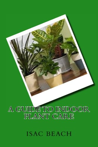 a-guide-to-indoor-plant-care