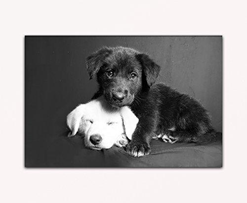 su-bilder24-de-negro-y-blanco-cachorro-perro-sobre-lienzo-con-bastidor-imagen-xxl-de-pared-alta-cali