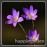 Potseed . 100 Pezzi zephyranthes Candida Piante (Cipolla Orchid Flowe) Mini Facile Piantare Balcone Divertimento al Coperto Flore Pentole: 10