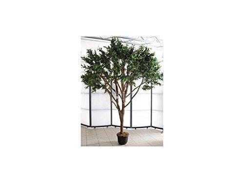 europalms-riesen-olivenbaum-250cm