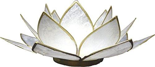 Trimontium tl12022g portavelas Nácar Brillo en Forma una dreiblättrigen Loto con info Conchas de placuna, nácar, 14x 14x 8cm