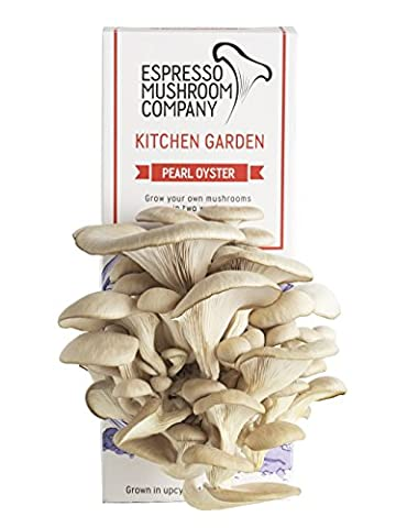 Pearl Oyster Mushroom Kitchen Garden Grow Your Own