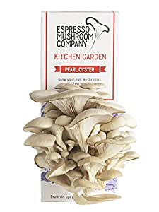 Pearl Oyster Mushroom Kitchen Garden Grow Your Own Kit