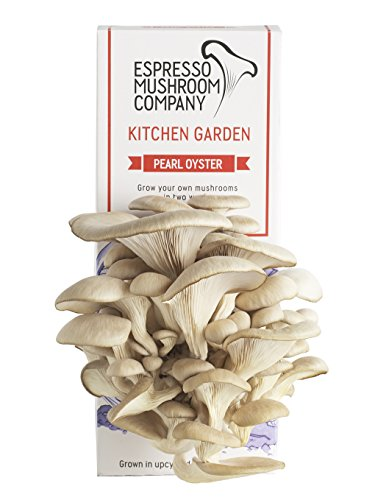 pearl-oyster-mushroom-kitchen-garden-grow-your-own-kit