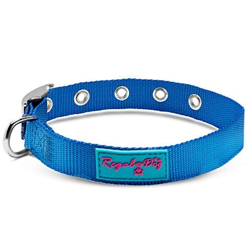 Regal Dog Products Hundehalsband aus Nylon, mit Metallschnalle, für kleine und mittelgroße Hunde, Blau und Rosa, Small (fits Neck Sizes 9 inches to 13 inches), blau