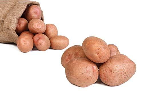 FRUCHTVERSAND24® Kartoffeln Laura (Speisekartoffeln) 12,5kg