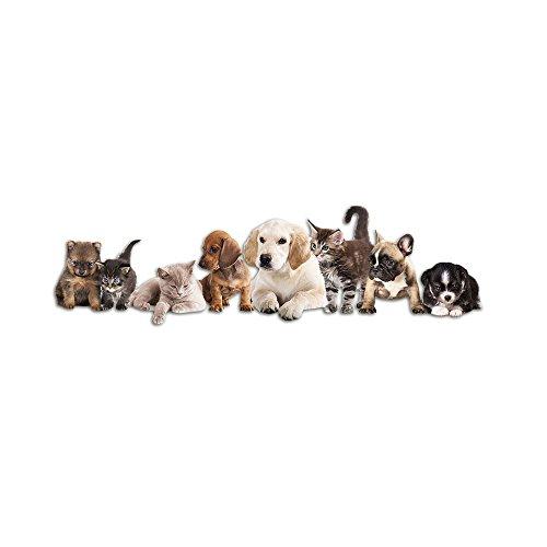 GRAZDesign Deko für Hundezimmer Aufkleber Tiere Haustiere - Wanddekoration Wandsticker Katzen Hunde Babys - Wandtattoo Kinderzimmer Welpen Kätzchen / 145x40cm / 723020_40