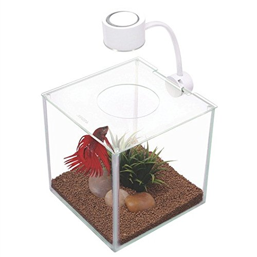 Marina Betta Kit Aquarium, Würfelform, Glas, mit LED-Leuchte, 3,4 l