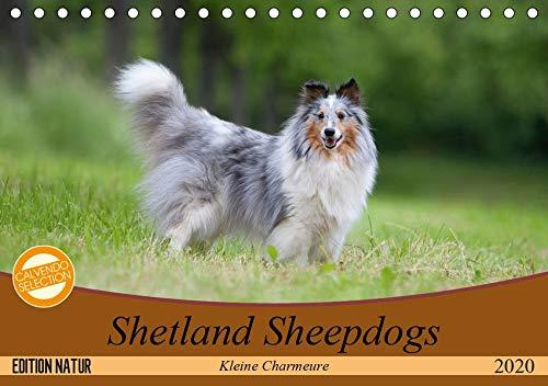 Kleine Charmeure (Tischkalender 2020 DIN A5 quer): Shelties mit besonderem Charme (Monatskalender, 14 Seiten ) (CALVENDO Tiere) ()