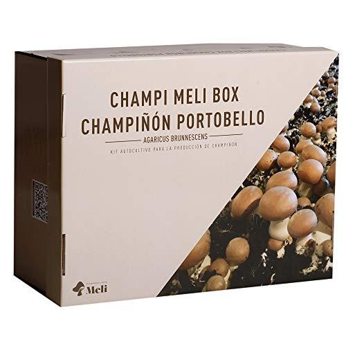Cultivo de Champiñón Portobello