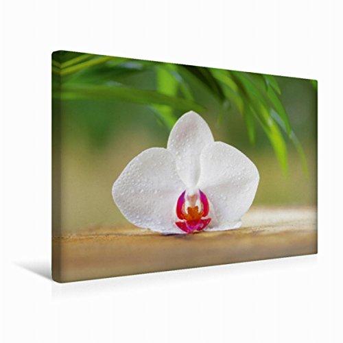 Calvendo Premium Textil-Leinwand 45 cm x 30 cm quer Orchideenblüte | Wandbild, Bild auf Keilrahmen, Fertigbild auf echter Leinwand, Leinwanddruck Gesundheit Gesundheit