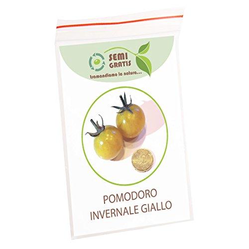 50 graines de la tomate d'hiver jaune