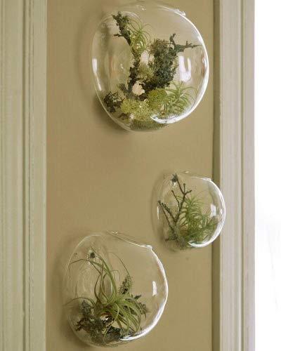 EssenceLiving Set von 3 Wandblasen Terrarien Indoor Pflanzen Pflanzer Vase Wand montiert Mini Aquarium Wanddekor