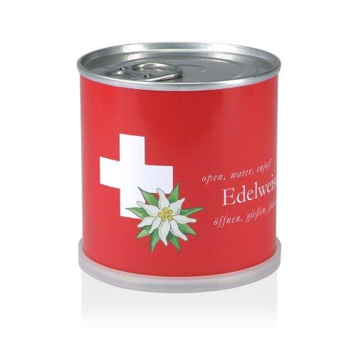 Extragifts Blumen in der Dose - Edelweiss Schweiz