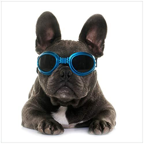 Wallario Glasbild Cooler Hund mit Sonnenbrille in blau - Französische Bulldogge - 50 x 50 cm in Premium-Qualität: Brillante Farben, freischwebende Optik
