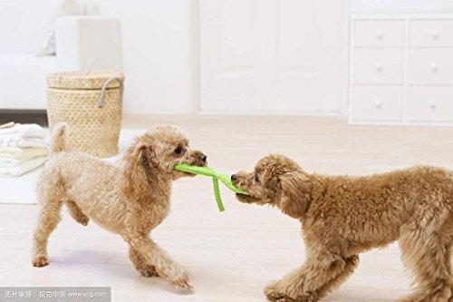 Hundespielzeug Interaktives Spielzeug für Hunde Kauspielzeug Baumwollknoten Hund Zahnreinigung - 5 Teile