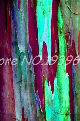 Ventes! 200 pcs/sac Rare arc en ciel, arbre tropical Showy, vivace Bonsai Potted Maison et Jardin (4 ing mixtes GRAINES SEULEMENT)