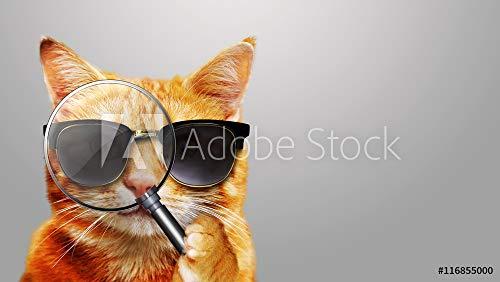 druck-shop24 Wunschmotiv: Katze mit Lupe - Cat with Magnifier and Sunglasses #116855000 - Bild hinter Acrylglas - 3:2-60 x 40 cm / 40 x 60 cm