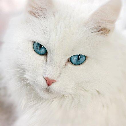 startonight-glow-in-the-dark-canvas-picture-white-cat-80-x-80-cm