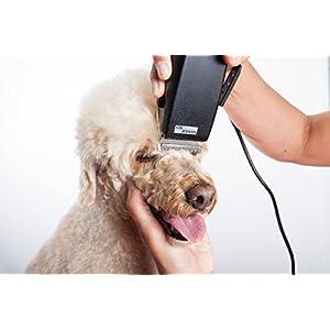 Máquina de cortar pelo a perros