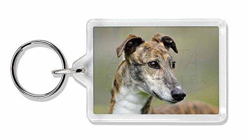 windhund-hunde-foto-schla-1-4-sselbund-tierstrumpffa-1-4-llergeschenk