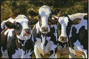 dairy-queens-doormat