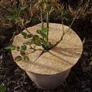 Kokosmulchscheibe Umweltfreundliche Naturfaser