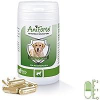 Pastillas AntiGarrapatas para Perros Gigantes (+50kg) - 60 cápsulas | Producto 100% Natural | Complejo de Vitamina B que Actúa como Escudo Anti Garrapatas