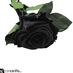 Rosa -Eterna Preservada (Negro) Black Beauty 50CM-6-6.5 DIAMETRO CABEZA ROSA