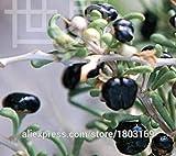 2016 Orgánica 200 / 10kinds paquete de Goji Berry Semillas bayas de Goji Wolfberry, semillas de frutas viables envío gratuito