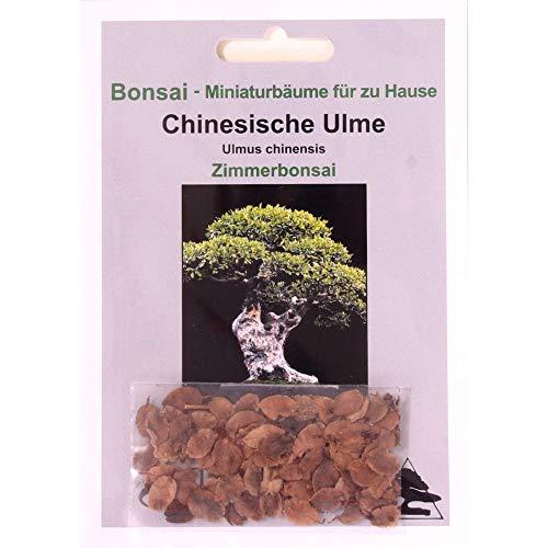 Bonsai - 30 Samen Chinesische Ulme, Ulmus parviflora 90102 (Samen Chinesische)