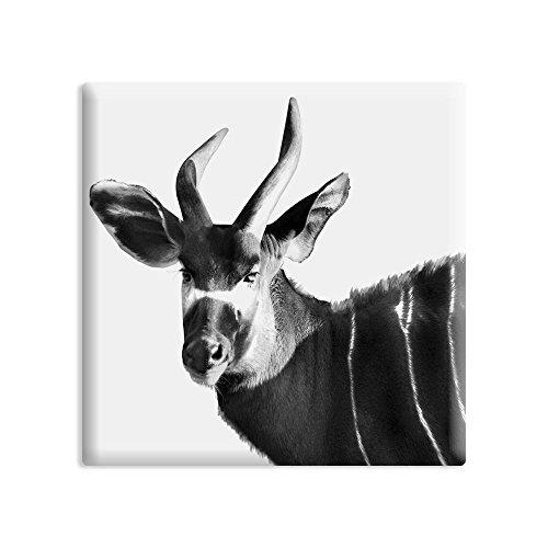 designersgroup - Kühlschrankmagnet Tiere - 5 x 5 cm - Magnet mit Foto-Motiv: Kudu (Kudu Kühlschrank-magnete)