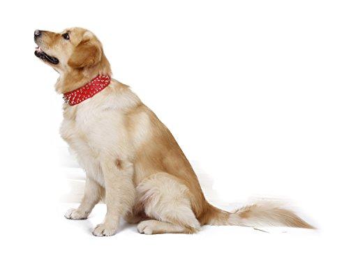 JIALUN-Haustier Mode Multicolor Leder Welpen Haustier Hundehalsband Cat Neck Strap Halskette Pet Halskette ( Color : Red , Size : M ) (Welpe Harness-leder)