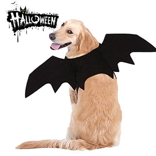 MMNM Katze Hund Halloween-Kostüme, Super Lustige Süße Requisiten, Kleine - Super Katze Kostüm