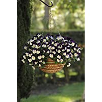 "Desconocido Generic Flower Pansy Trailing Invierno Floraciã""N Cool Wave Violet Wing 200 Semillas A Granel"
