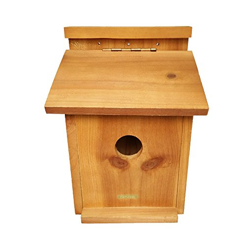 bestok-hawk-eye-nature-cam-backyard-birdhouse-w-hawk-eye-nature-cam-installed-bird-watchers-dream-sh