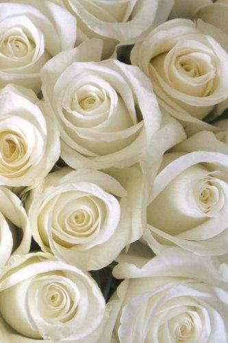 White Roses: In The Garden Journal/Notebook/Diary: Volume 7
