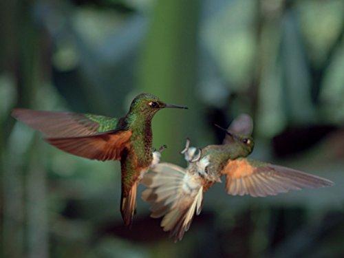 David Attenborough: Könige der Lüfte
