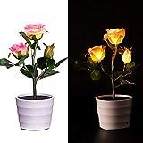 Best clip pot - TAOtTAO Solar Lily Flower Lights 2LED Lily pot Review