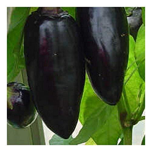 Chili mittelscharf - Black Hungarian - 10 Samen