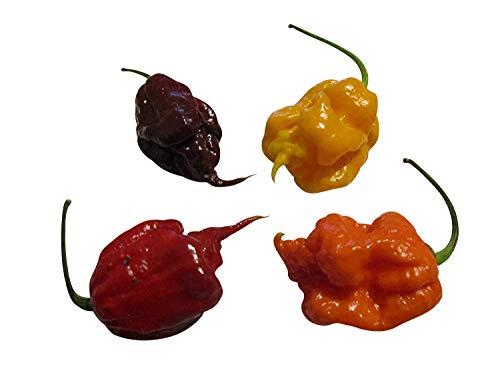 ">>>7 Pot,Trinidad Scorpion & Bhut Jolokia<<< Chili Samen Mix""6 Super-Hot's"" ***a. 10 Samen = 60 Samen***"